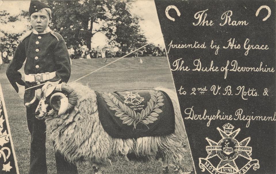 1902_Ram