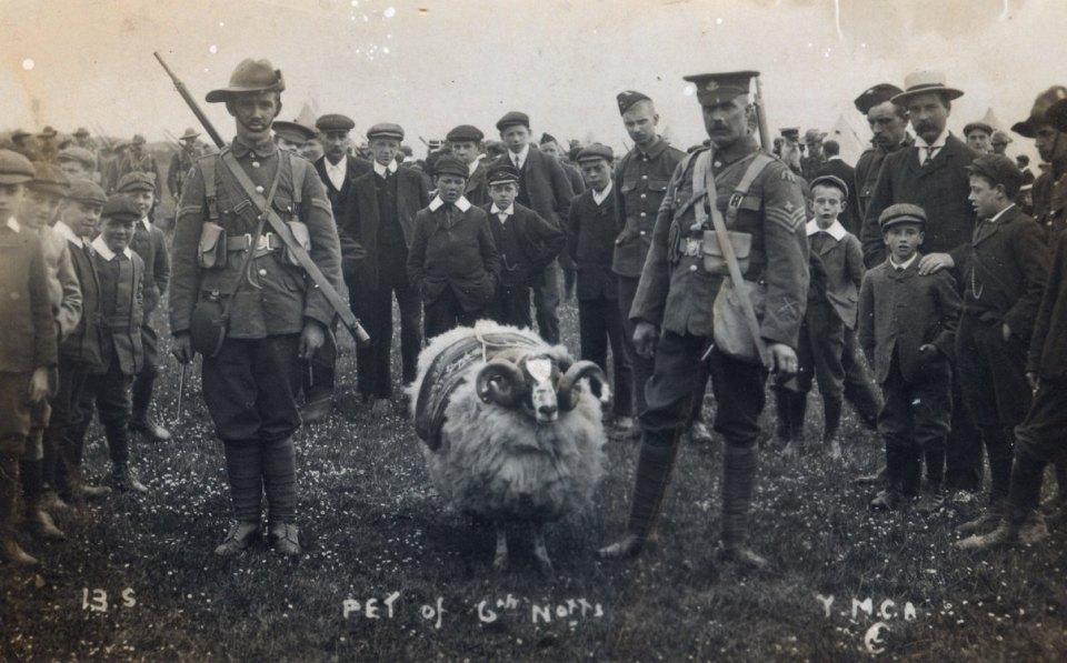 1908 Ram