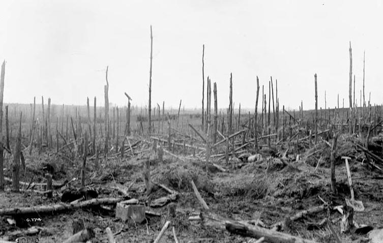 Armagh Wood 1916